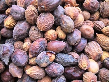 Fruits d'Arganier secs, un produit BIO